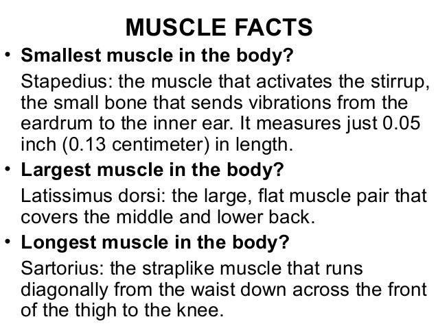 7. muscular system copy, Muscles