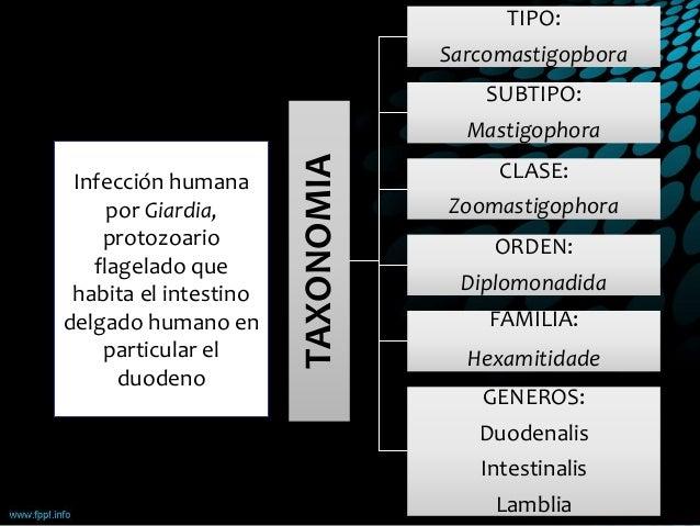 Les adaptations principales écologiques des parasites