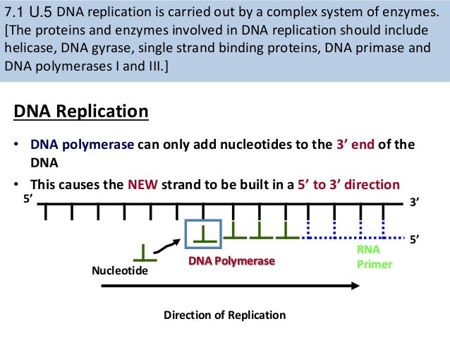 7.1 dna & replication