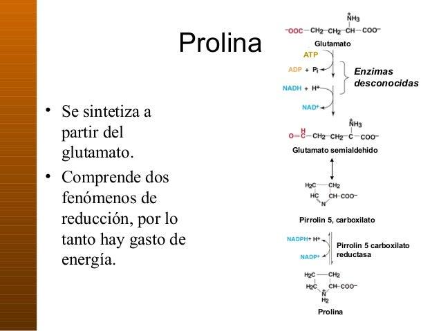 7. metabolismo de proteinas y aminoacidos