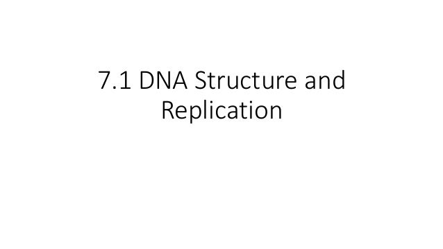 7.1 DNA Structure and Replication
