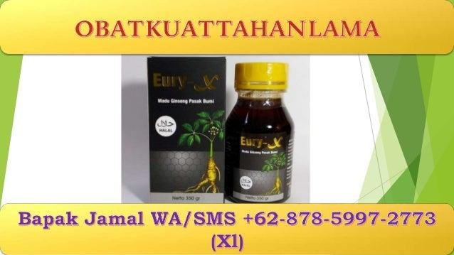 obat kuat pria alami bapak jamal wa sms 62 878 5997 2773
