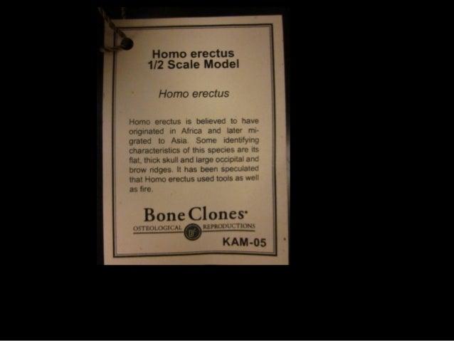 7 2012 ppt skull review
