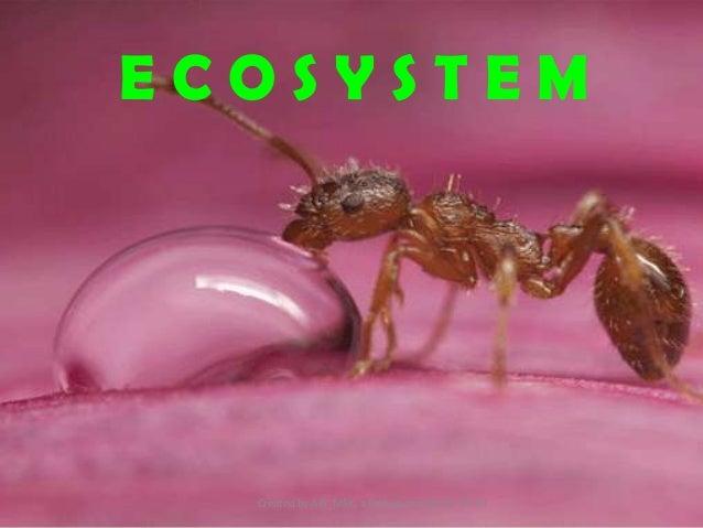 ECOSYSTEM  Created by Alfi_MSK, a Biology teacher of GIS JH
