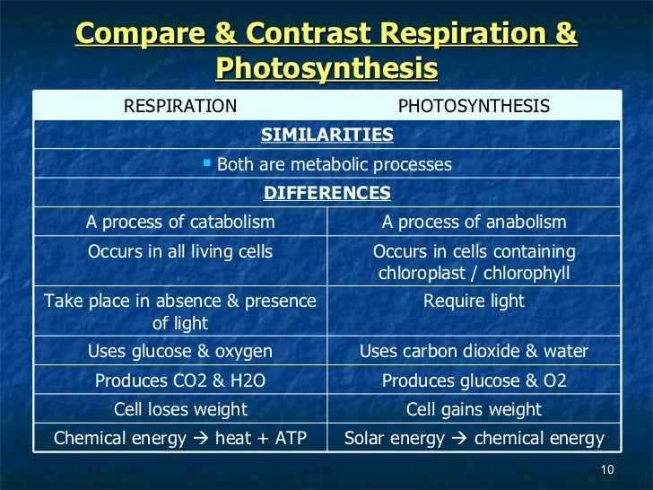 comparing and contrasting photosynthesis and cellular respiration Cellular respiration is the process that releases energy from food in the presence  of  compare and contrast photosynthesis and cellular respiration in terms of.
