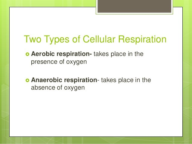 Zoo1 Cellular Metabolism