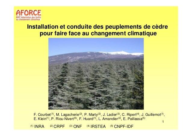 Installation et conduite des peuplements de cèdre  pour faire face au changement climatique  F. Courbet(1), M. Lagacherie(...