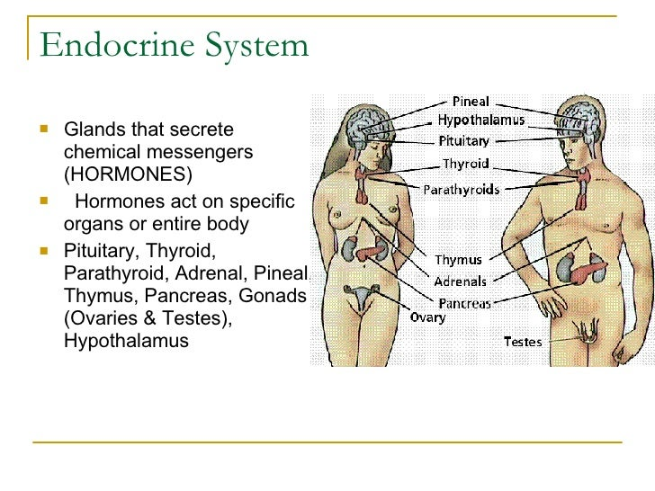 Notes: Endocrine System