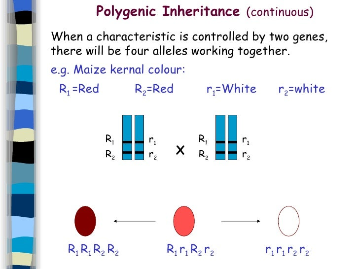 7. Genetics And Inheritance