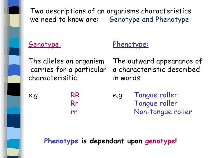 relationship between alleles and genotype phenotype