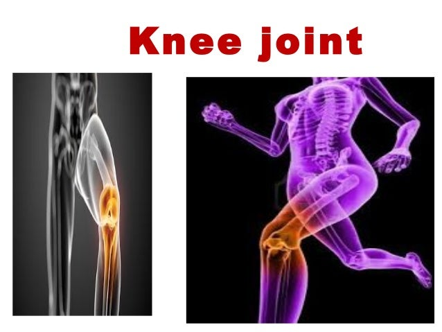 Knee joint anatomy and clinical ccuart Gallery