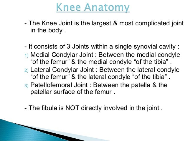 Knee Joint Anatomy And Clinical