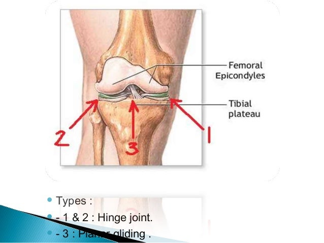 Knee joint anatomy and clinical types 1 2 hinge joint 3 planar gliding ccuart Gallery