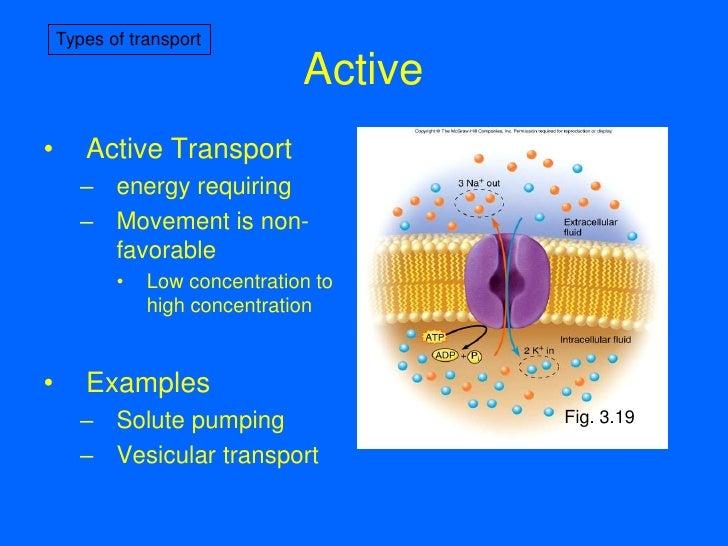 7-Membrane Transport I  Example Of Passive Transport