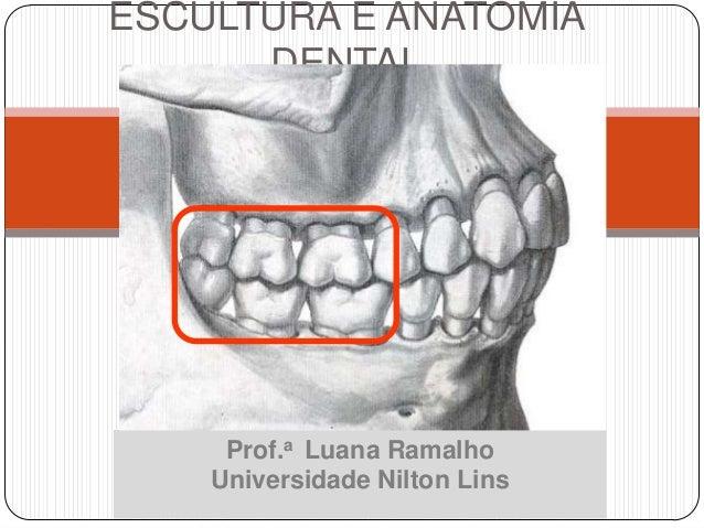 ESCULTURA E ANATOMIA      DENTAL         MOLARES     Prof.a Luana Ramalho    Universidade Nilton Lins