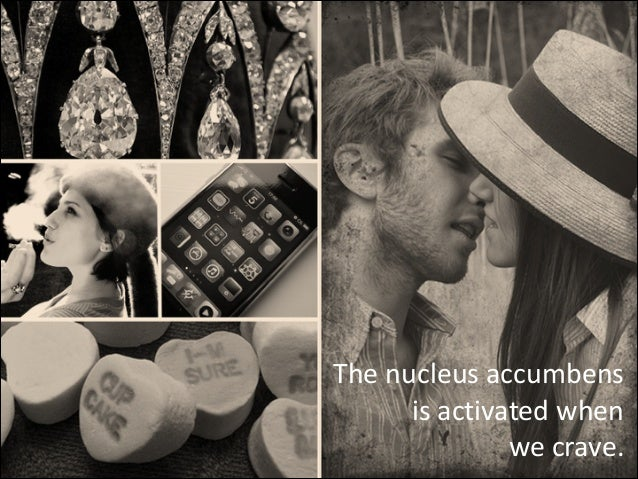 The  nucleus  accumbens   is  activated  when   we  crave.
