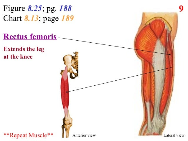 7. posterior lateral thigh