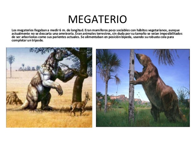 Otros Animales Despues De Los Dinosaurios Ya Extinguidos Con estos dibujos de dinosaurios podrás imprimir y pintar grandes animales que ya se han extinguido como el branquiosaurio, el velociraptor, el tiranosaurio o el diplodocus. los dinosaurios ya extinguidos