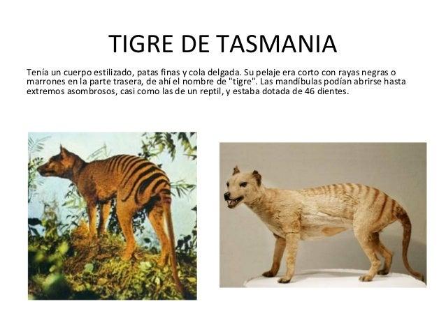 Otros Animales Despues De Los Dinosaurios Ya Extinguidos Contact animales extintos on messenger. los dinosaurios ya extinguidos