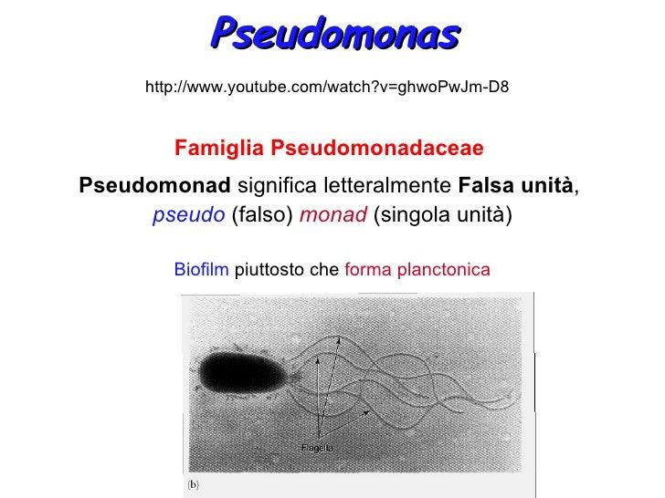 Pseudomonas      http://www.youtube.com/watch?v=ghwoPwJm-D8         Famiglia PseudomonadaceaePseudomonad significa lettera...