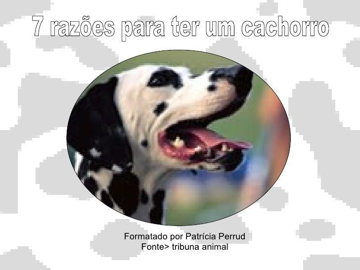 Formatado por Patrícia Perrud Fonte> tribuna animal 7 razões para ter um cachorro