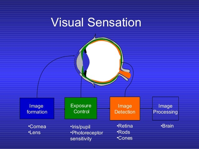 what is visual sensation