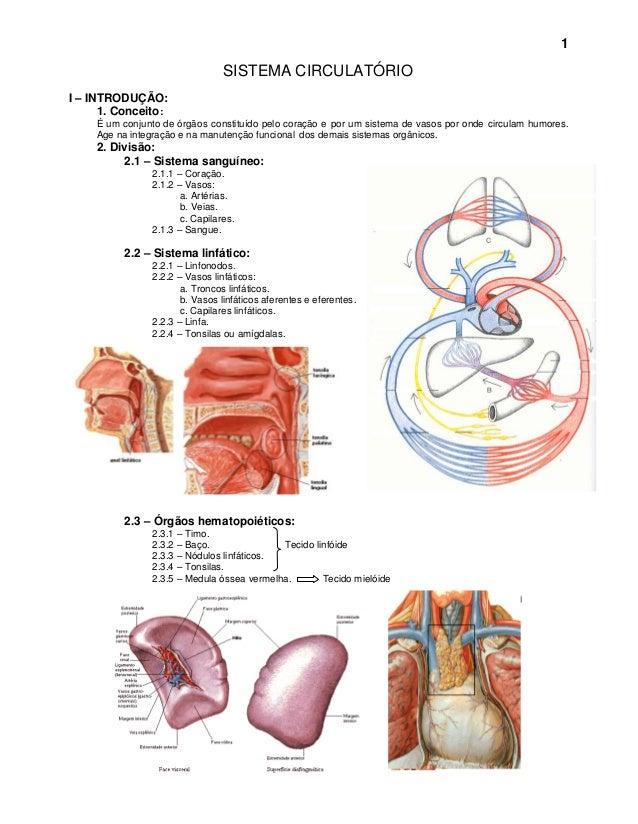 1                                 SISTEMA CIRCULATÓRIOI – INTRODUÇÃO:      1. Conceito :     É um conjunto de órgãos const...