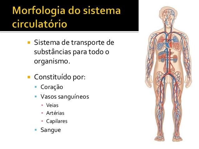 CN9-sistema circulatório Slide 2