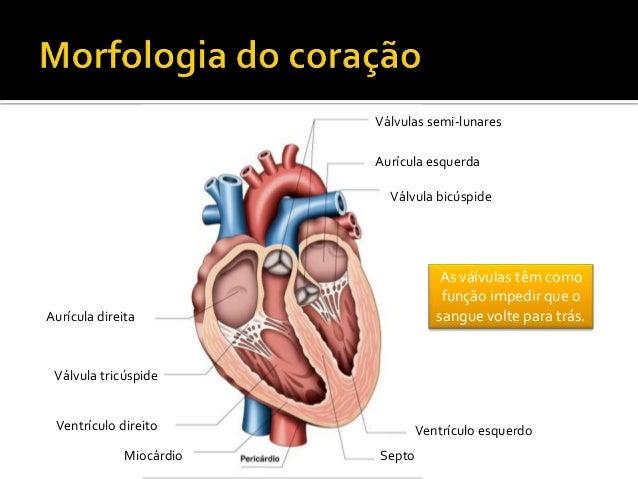 CN9-sistema circulatório Slide 3