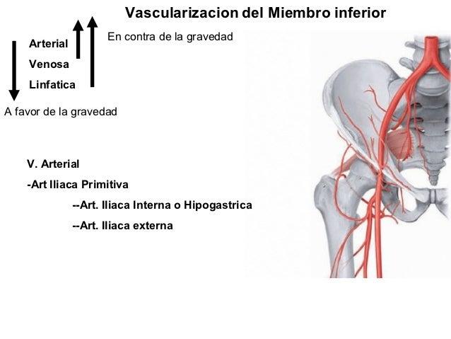 Vascularizacion del Miembro inferior                      En contra de la gravedad    Arterial    Venosa    LinfaticaA fav...