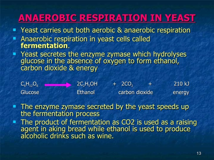 aerobic respiration in yeast Yeast propogation with aerobic respiration the primary goal of fermentation is the production of alcohol, while the goal of propagation is increasing the yeast biomass on one hand, anaerobic yeast respiration converts sugar into alcohol, carbon dioxide, and some energy.