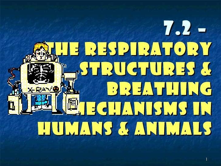 7.2 –THE RESPIRATORY   STRUCTURES &      BREATHING  MECHANISMS INHUMANS & ANIMALS               1