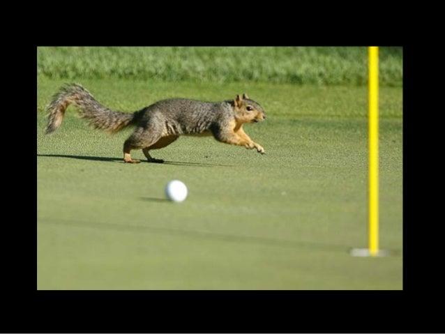 717- Squirrels7 Slide 2