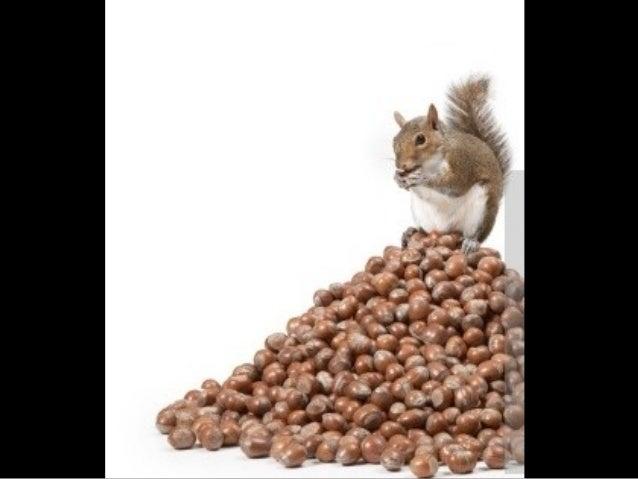 717- Squirrels7 Slide 3