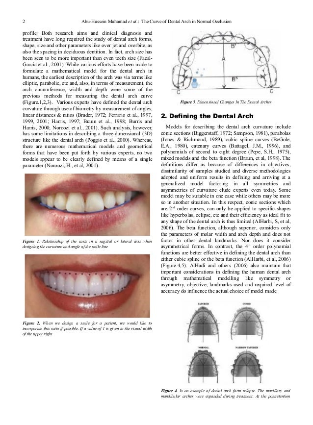 The curve of dental arch in normal occlusion