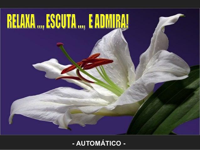 - AUTOMÁTICO -