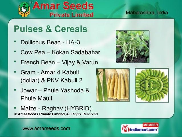 Maharashtra, IndiaPulses & Cereals Dollichus Bean - HA-3 Cow Pea – Kokan Sadabahar French Bean – Vijay & Varun Gram - ...