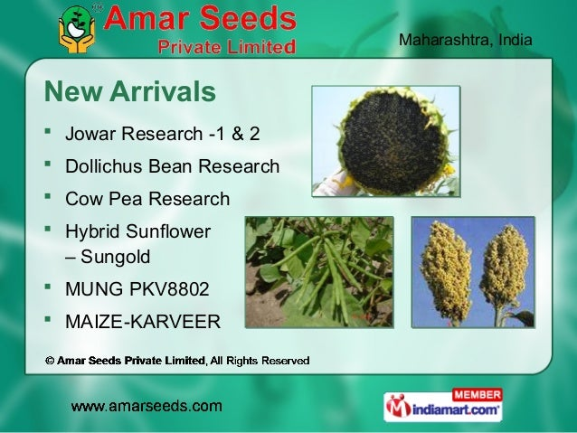 Maharashtra, IndiaNew Arrivals Jowar Research -1 & 2 Dollichus Bean Research Cow Pea Research Hybrid Sunflower  – Sung...