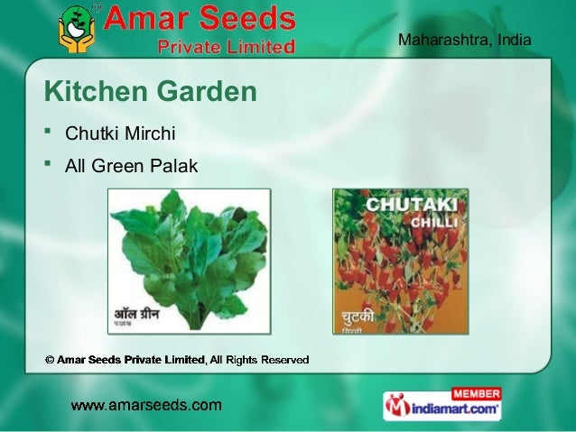 Maharashtra, IndiaKitchen Garden Chutki Mirchi All Green Palak