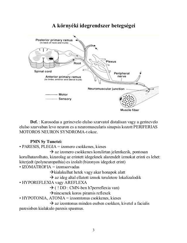 neurologia Slide 3