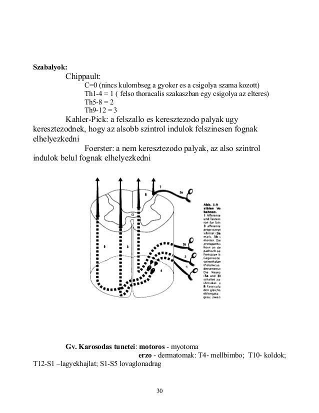 Szabalyok:Chippault:C=0 (nincs kulombseg a gyoker es a csigolya szama kozott)Th1-4 = 1 ( felso thoracalis szakaszban egy c...