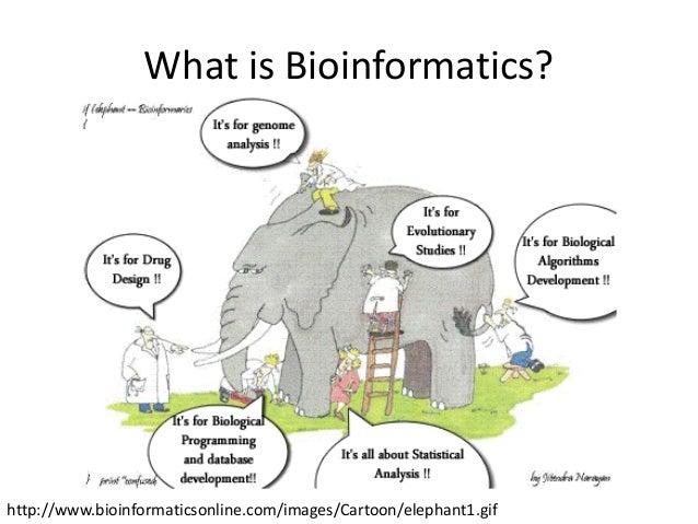 Bioinformatics for geneticists essay