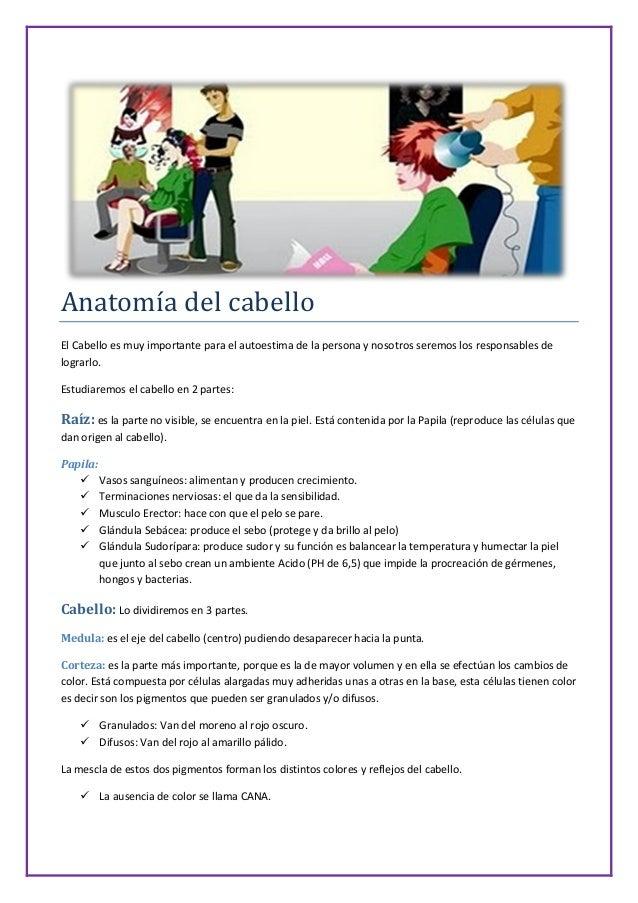 Contemporáneo Anatomía De Hebra De Cabello Fotos - Imágenes de ...