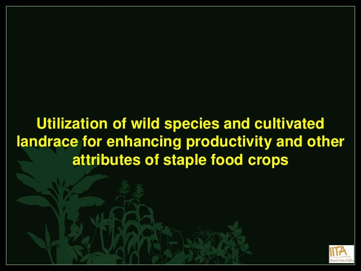 Utilization of wild species and cultivatedlandrace for enhancing productivity and other         attributes of staple food ...