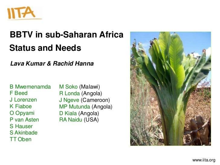 BBTV in sub-Saharan AfricaStatus and NeedsLava Kumar & Rachid HannaB Mwemenamda   M Soko (Malawi)F Beed         R Londa (A...