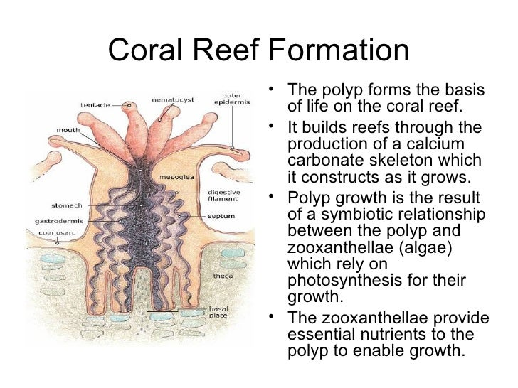 coral polyp and zooxanthellae symbiotic relationship definition