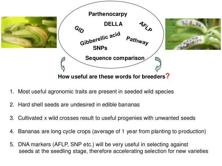 dna extraction of a musa acuminata essay Free essay: extraction of dna from onions abstract the  dna  extraction of a musa acuminata biology lab report \analyze and.