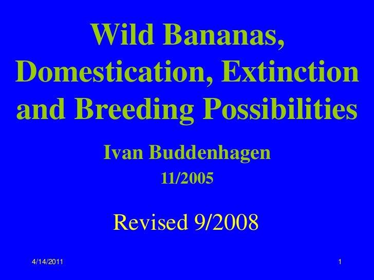 Wild Bananas,Domestication, Extinctionand Breeding Possibilities             Ivan Buddenhagen                  11/2005    ...