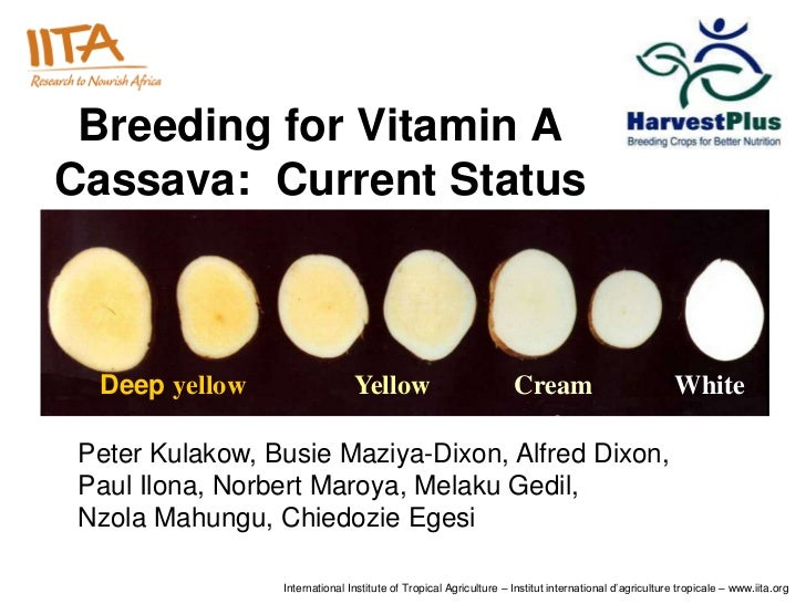 Breeding for Vitamin ACassava: Current Status  Deep yellow                   Yellow                             Cream     ...