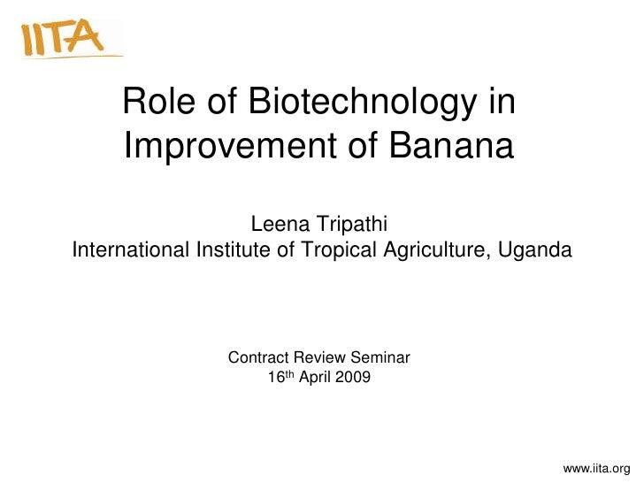 Role of Biotechnology in     Improvement of Banana                     Leena TripathiInternational Institute of Tropical A...